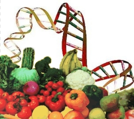 La dieta ti modella a partire dal tuo DNA