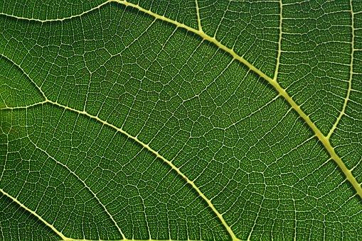 La fibra alimentare: cosa è e a cosa serve